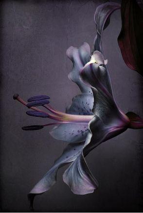 violet flower.jpg
